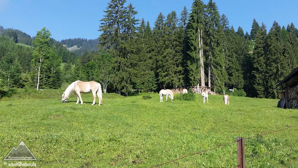 Alp idyll Höfen/Reutte